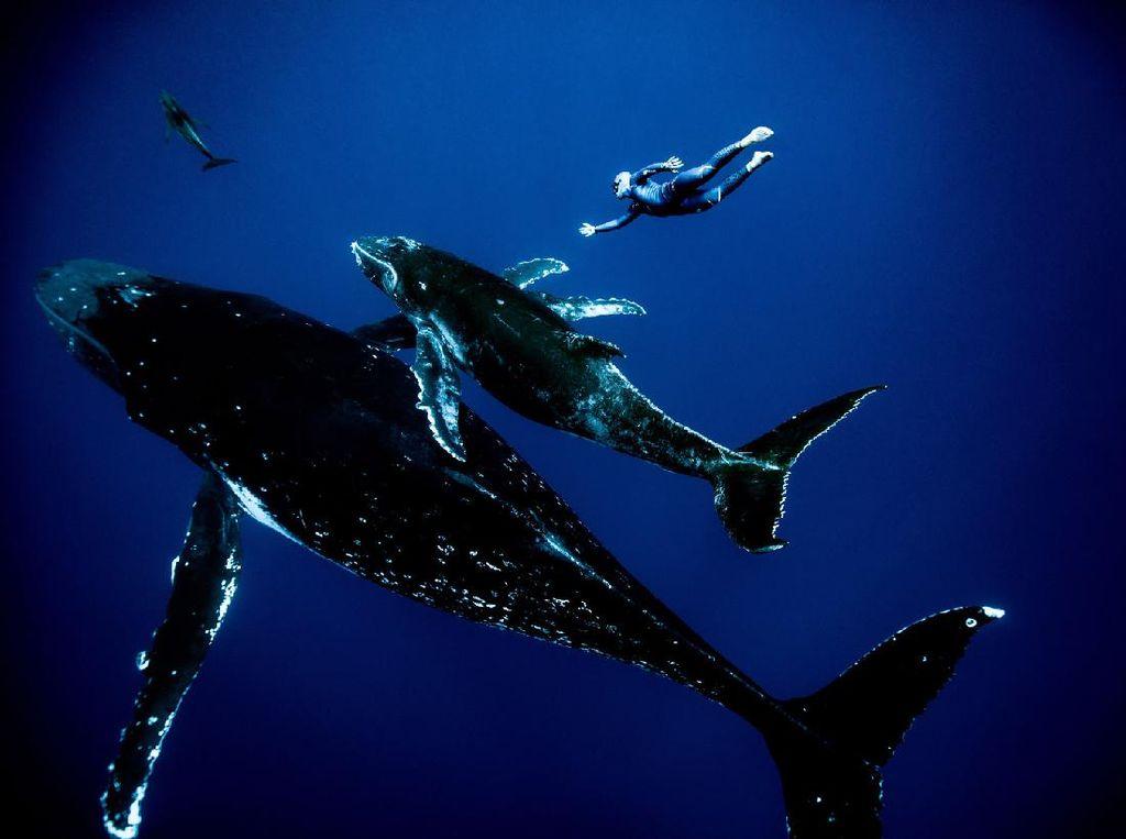 Potret Jagoan Freediving Beraksi dengan Anggun di Bawah Air
