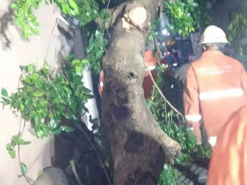 Pohon Tumbang di Surabaya Timpa 2 Warga Hingga Terhimpit dan Patah Tulang