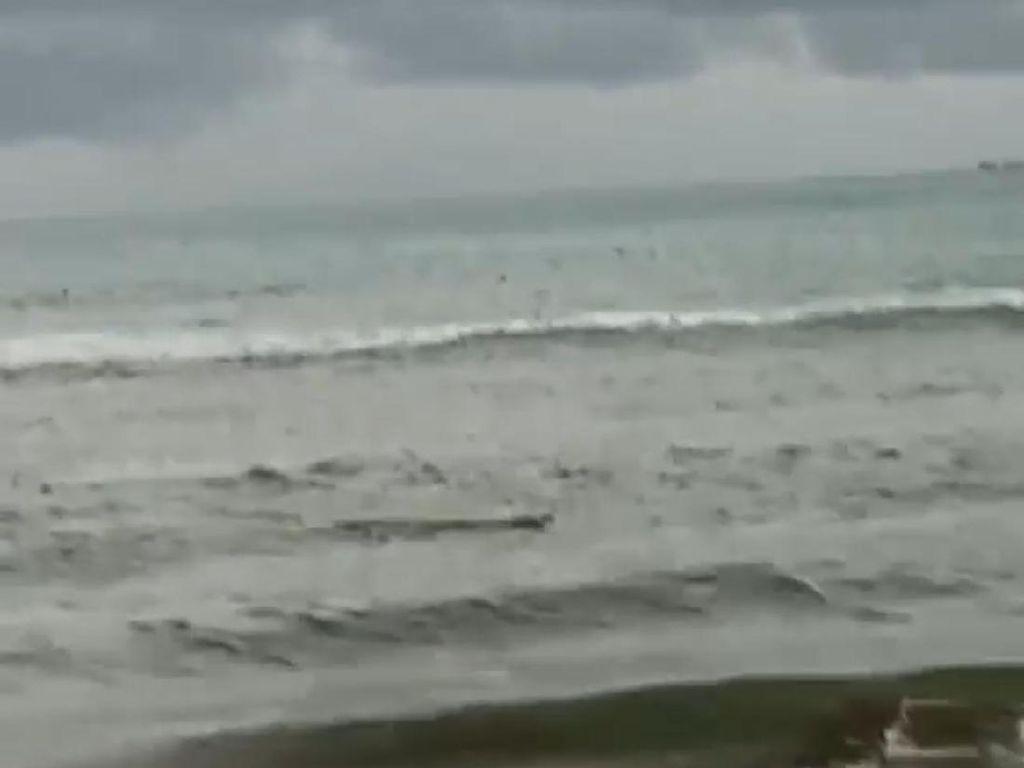Buaya Muncul di Pantai Tiku, BKSDA Agam Pasang Spanduk Peringatan