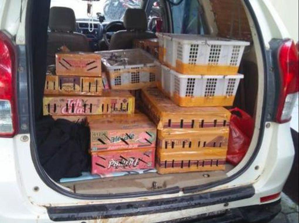 KLHK Gagalkan Penyelundupan Ribuan Burung di Lampung, Ada yang Dilindungi