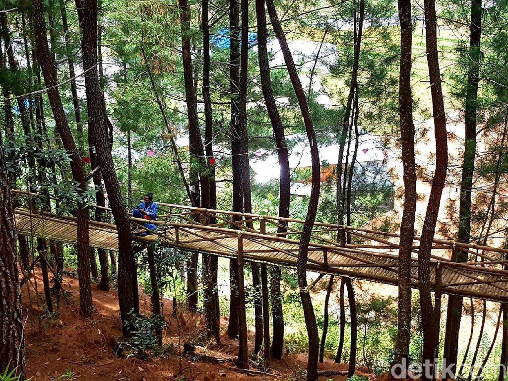 Menjelajah Wisata Hutan Pinus Lenong di Mamasa