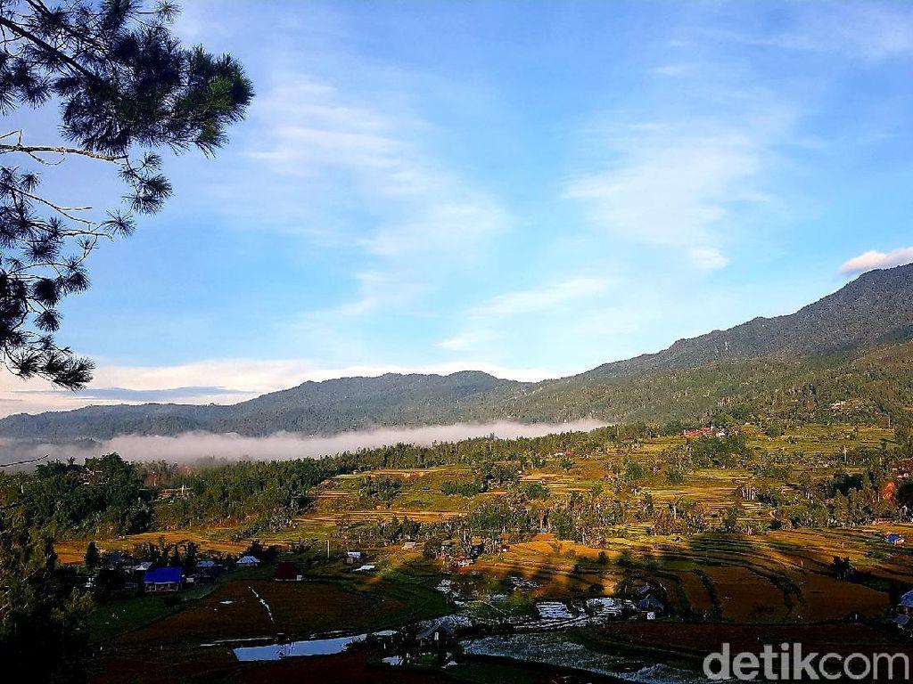 Foto: Hutan Pinus Lenong, Rekomendasi Tempat Bersantai di Mamasa