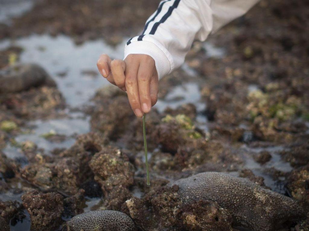 Mengenal Bau Nyale, Tradisi Berburu Cacing di Pantai Lombok