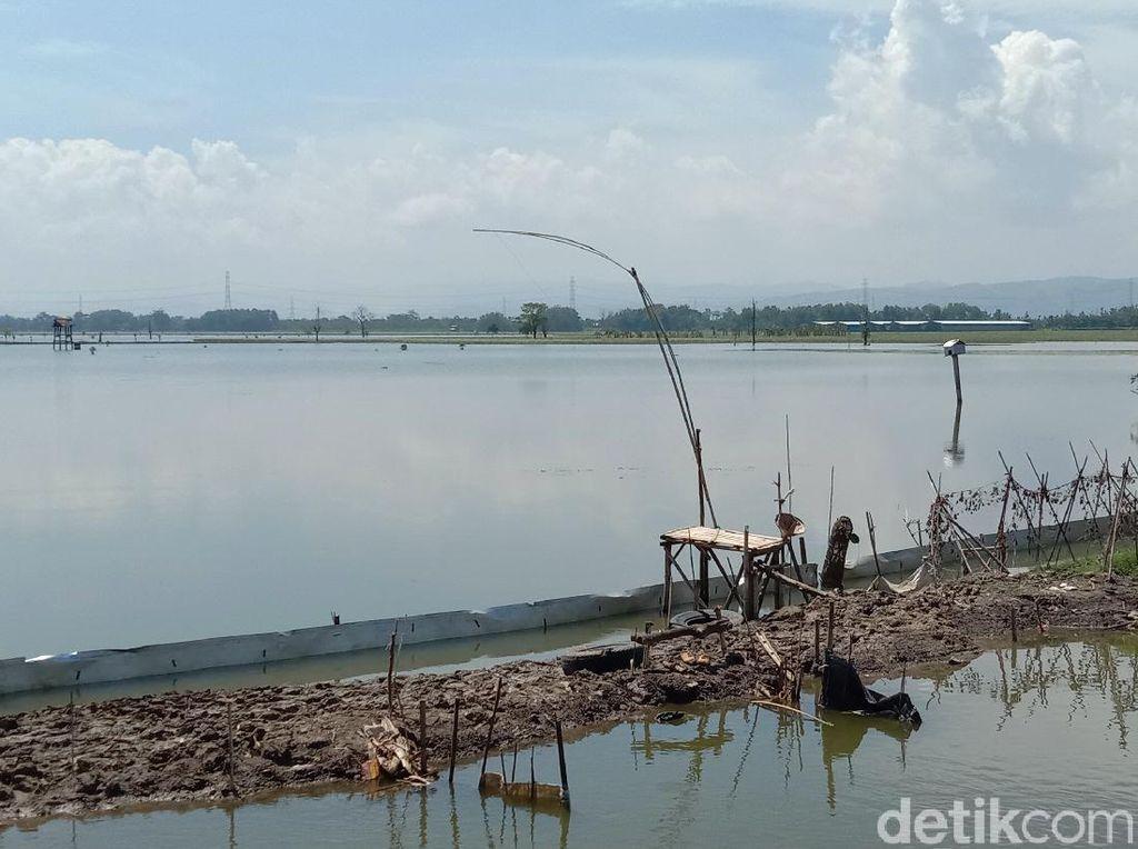 Ratusan Hektare Sawah Masih Kebanjiran, Petani di Kudus Belum Bisa Tanam