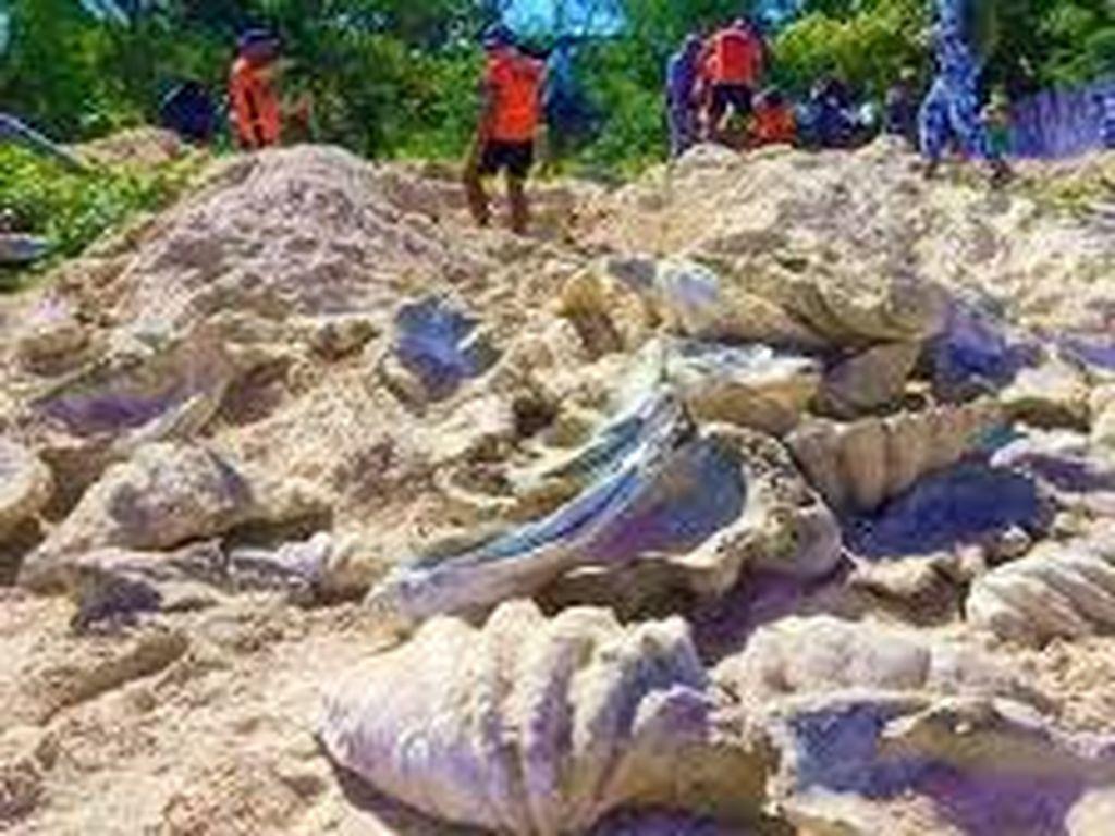 Kerang Raksasa Seharga Rp 47 Miliar Ditemukan di Filipina