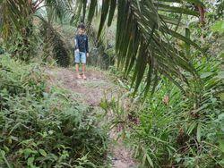 Asisten Kebun di Muratara Tewas Ditembak, Pelaku Diduga Pencuri Sawit