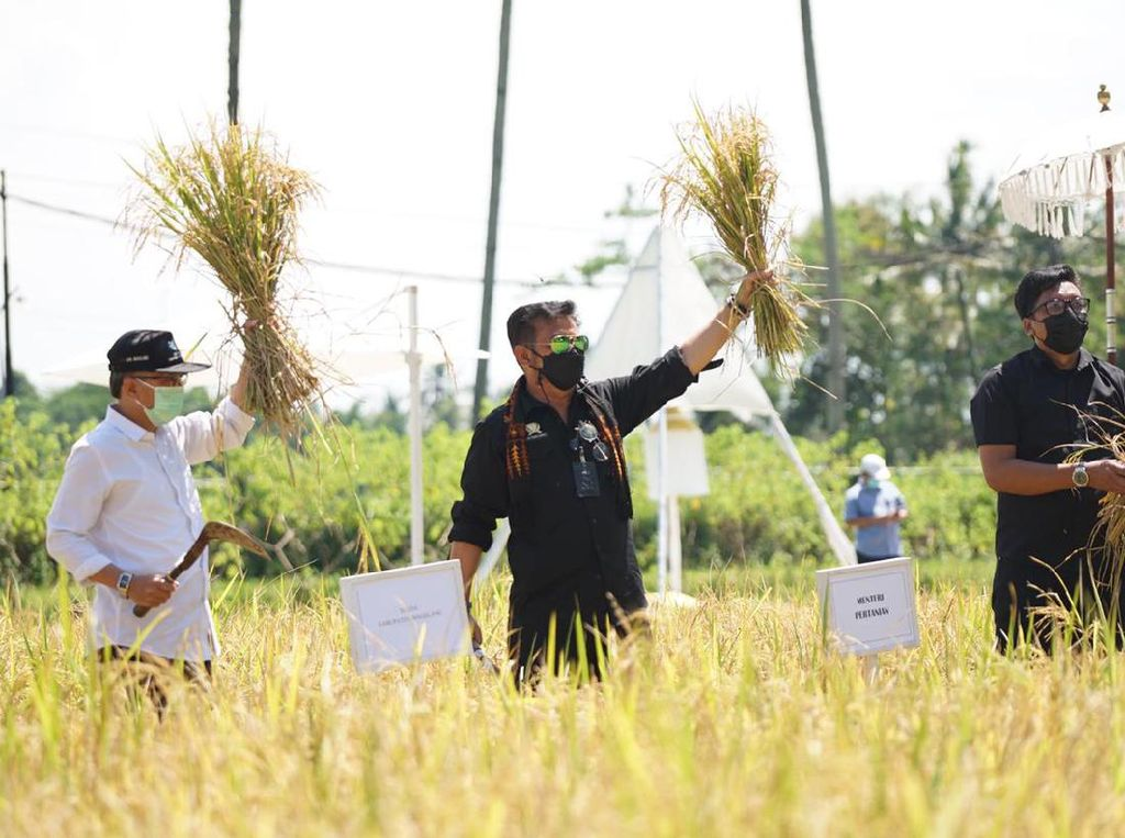 Cek Agrowisata Sawah di Jateng, Mentan: Bisa Diduplikasi Tempat Lain