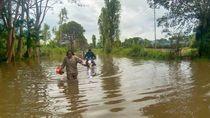 Banjir Jayawijaya Papua: 1.289 Rumah Terendam-Ratusan Ternak Babi Hanyut
