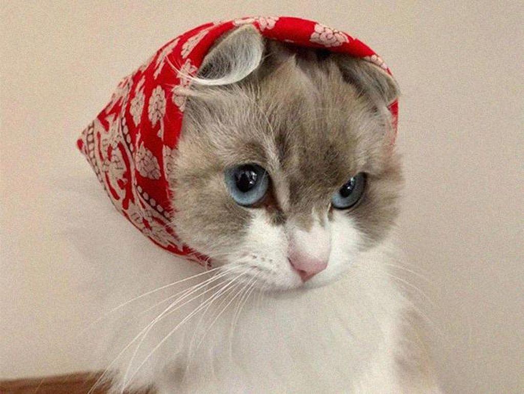 Gemasnya Kucing Saat Bergaya Seperti Masha