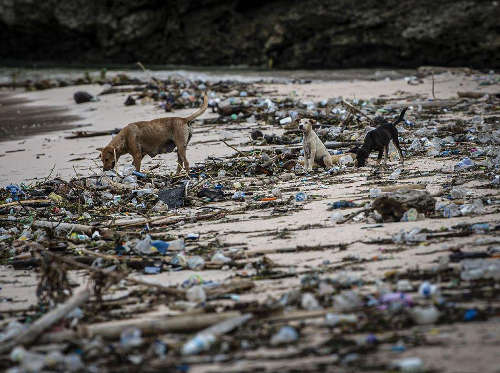 Duh, Pantai Pink Lombok Penuh Sampah