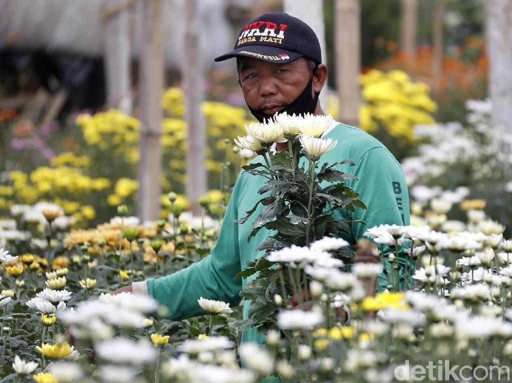 Gegara Jual Online, Bisnis Bunga Makin Segar hingga Untung Rp 70 Juta