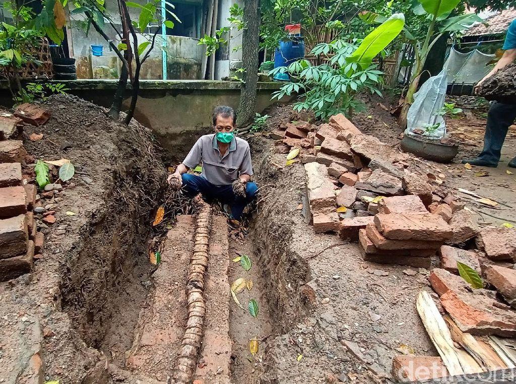 Langka! Warga di Kudus Temukan Bonggol Pohon Pisang Berukuran 3 Meter