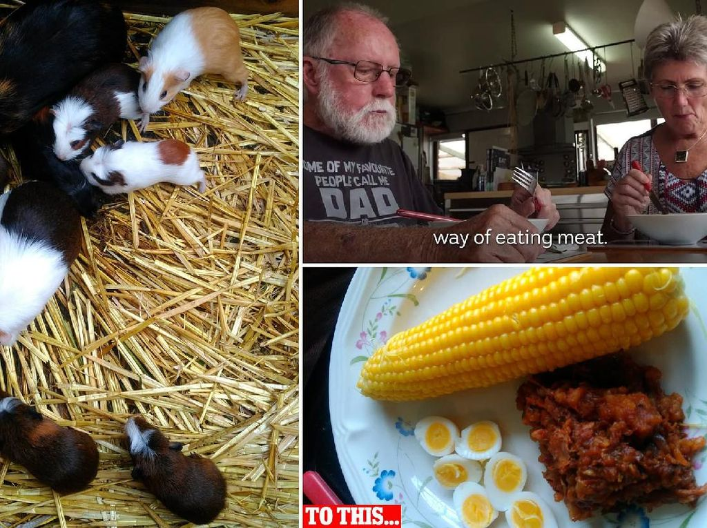 Duh! Pasangan Lansia Ini Beternak Tikus Belanda Untuk Dimakan