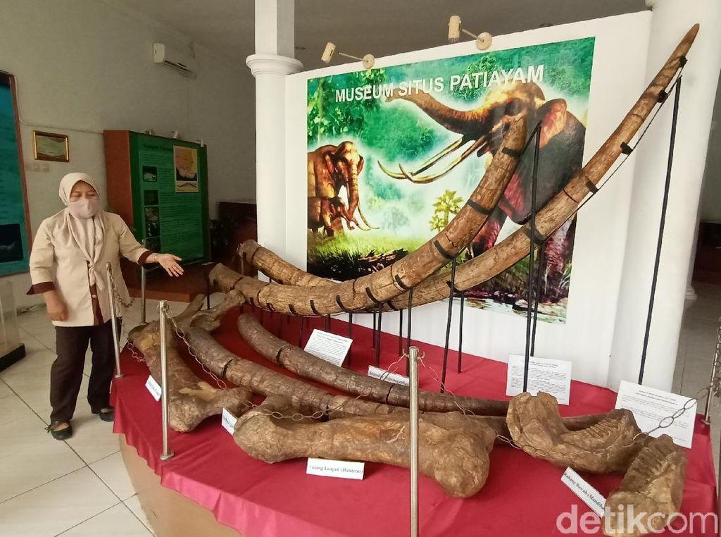 Miris Banget, Begini Kondisi Museum Purbakala Patiayam Kudus