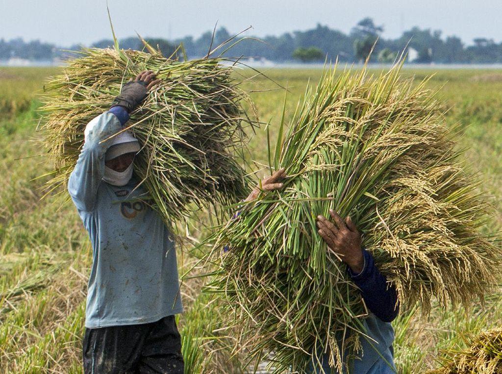 Sektor Pertanian Konsisten Tumbuh Positif Selama Pandemi, Ini Kata BPS