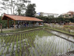 Bikin Betah, NK Cafe Tawarkan Sensasi Kulineran di Tengah Sawah