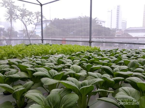 Kebun hidroponik rooftop gedung PLN di tengah Kota Bandung