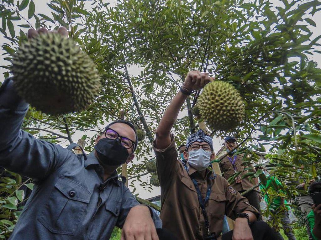 Momen Sandiaga Uno & Bima Arya Belah Duren di Rancamaya Bogor