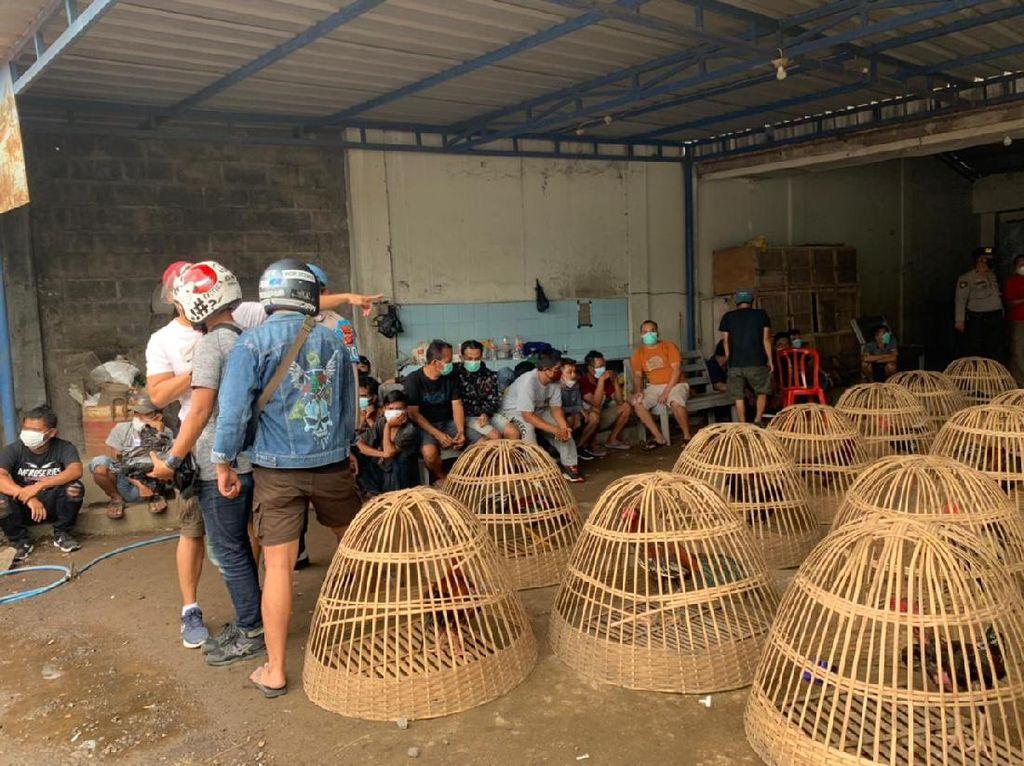 Polisi Gerebek Judi Sabung Ayam di Tasik, 64 Orang Diamankan