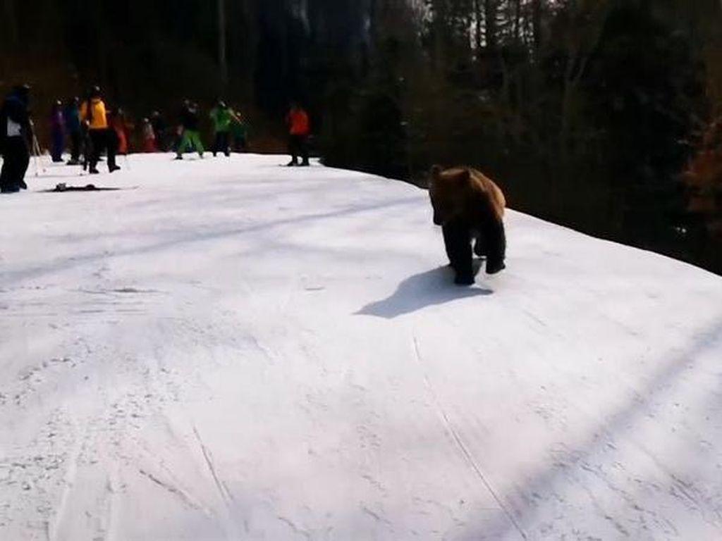 Hii Serem! Ada Turis Dikejar Beruang (Lagi) di Rumania