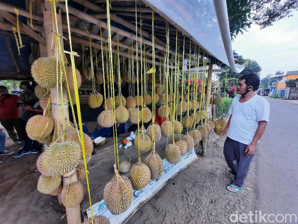 Potret Desa Wisata Rancamaya, Penghasil Durian di Bogor