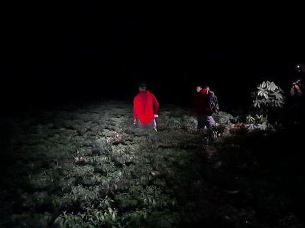 Cabai Mahal, Petani Tuban Jaga Kebun Saat Malam Cegah Aksi Pencurian