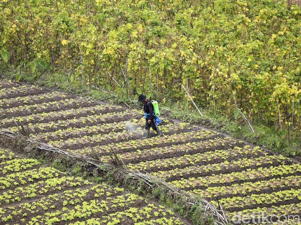 Setahun Pandemi, Petani di Malang Tetap Produktif
