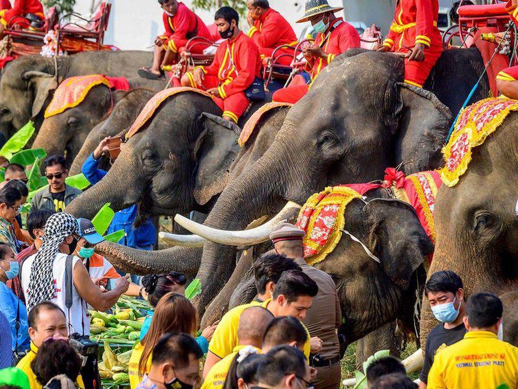 Foto: Hari Gajah Nasional di Negeri Gajah Putih