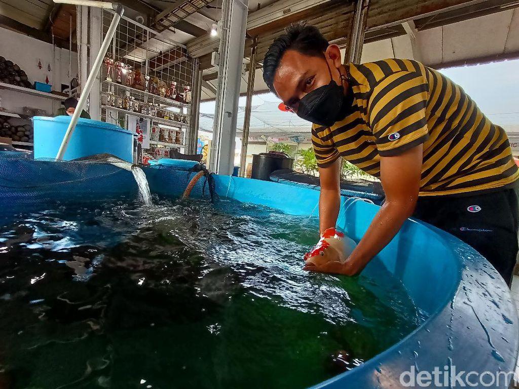 Berawal dari Hobi, Pria Asal Karawang Raup Cuan Lewat Bisnis Ikan Koi