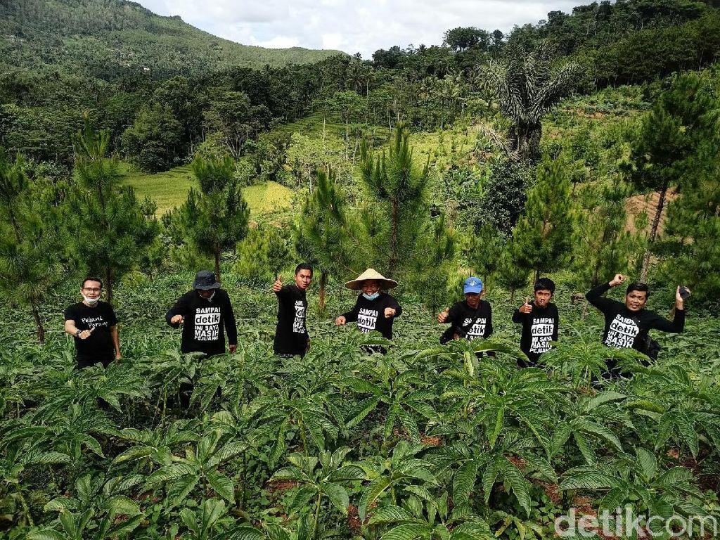 1.824 Hektare Lahan di Ponorogo Siap Ditanami Porang