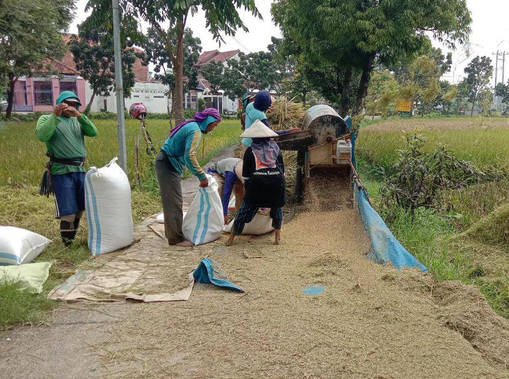 Kementan: Petani Harus Kita Jaga Kegembiraannya di Masa Panen