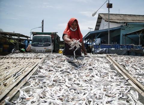 Tak hanya melaut perempuan nelayan yang ada di pesisir kabupaten demak punya cara sendiri untuk menghasilkan pundi pundi uang 2
