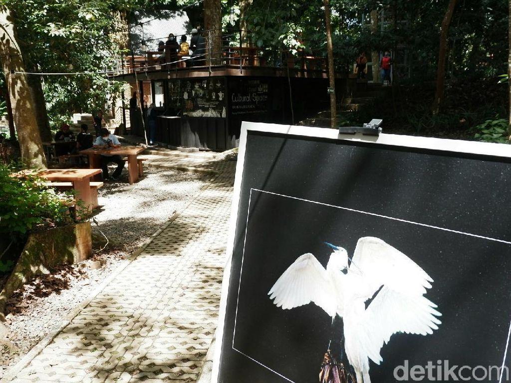 Menengok Keindahan Burung Blekok dalam Foto di Tahura Bandung