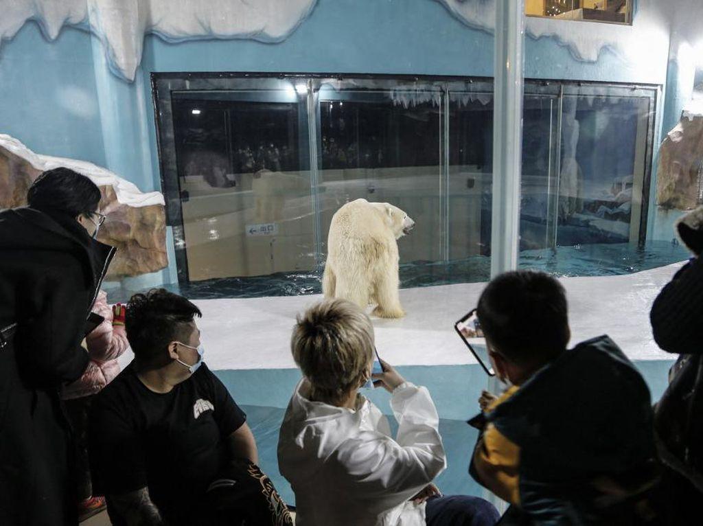 Kandangkan Beruang Kutub Demi View Tamu, Hotel Ini Dikecam