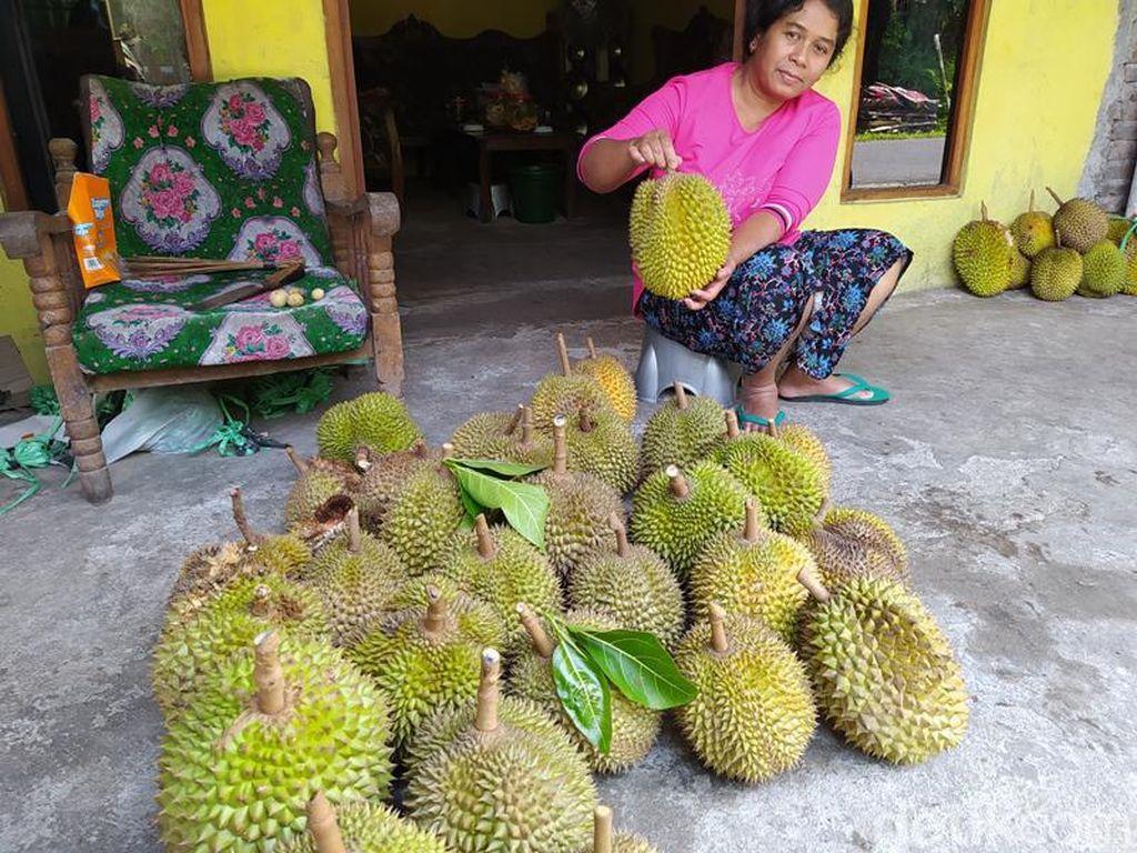 Curah Hujan Tinggi, Hasil Panen Durian Candimulyo Berkurang