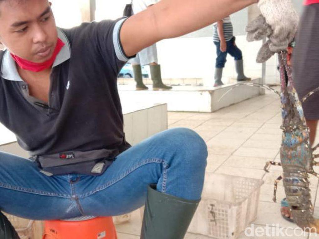 Lobster di Perairan Pangandaran Berkurang, Hasil Tangkapan Nelayan Anjlok