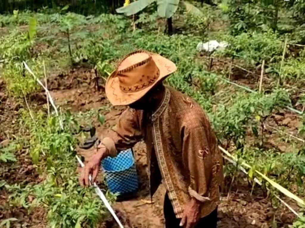 Kades di Bekasi Ungkap Manfaat Kampung Tangguh untuk Hasil Kebun
