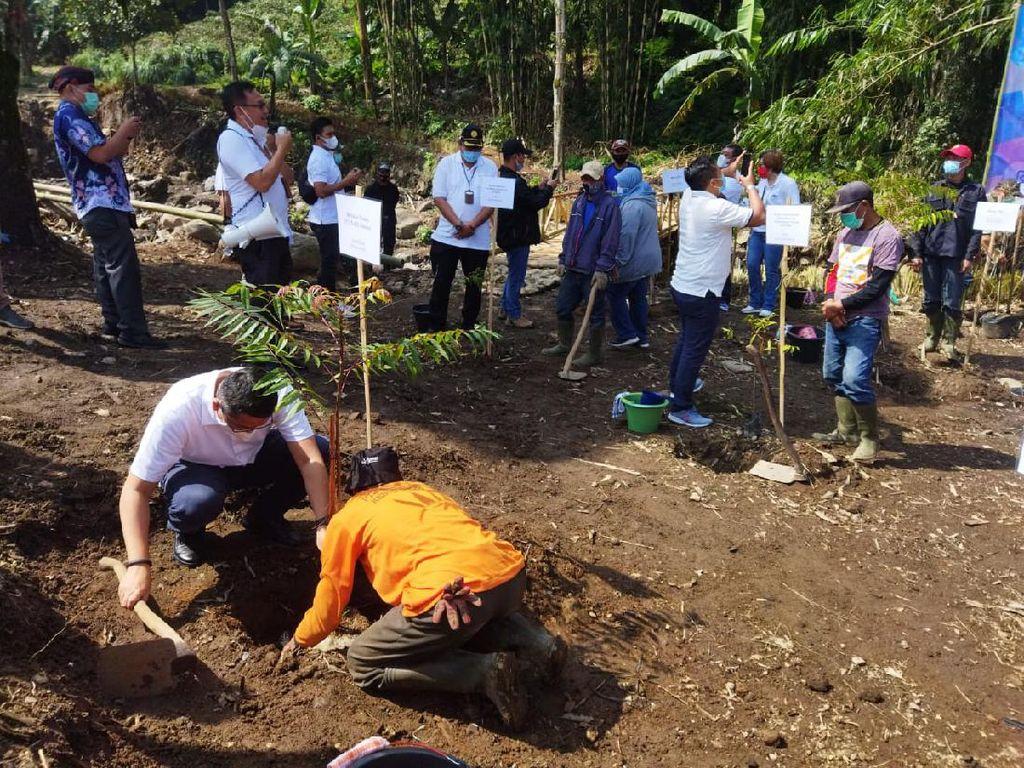 2.151 Hektare Lahan di Jabar-Banten Kritis, Ini Langkah PTPN VIII