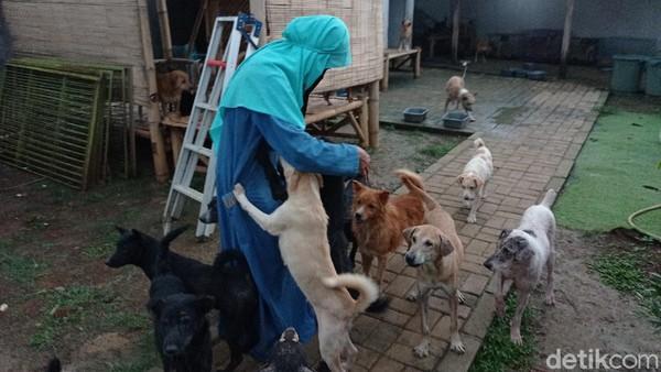 Hesti Sutrisno, wanita bercadar yang memelihara puluhan anjing