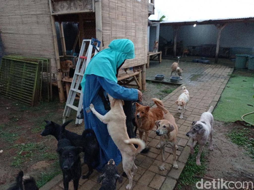 Wanita Bercadar Tak Ingin Anjingnya Diadopsi: Pasti Mau Dimakan