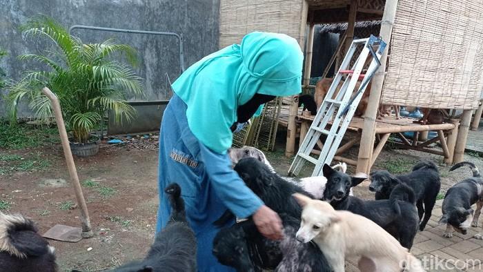 Hesti Sutrisno, wanita bercadar yang tampung puluhan anjing liar (Sachril Agustin Berutu/detikcom).