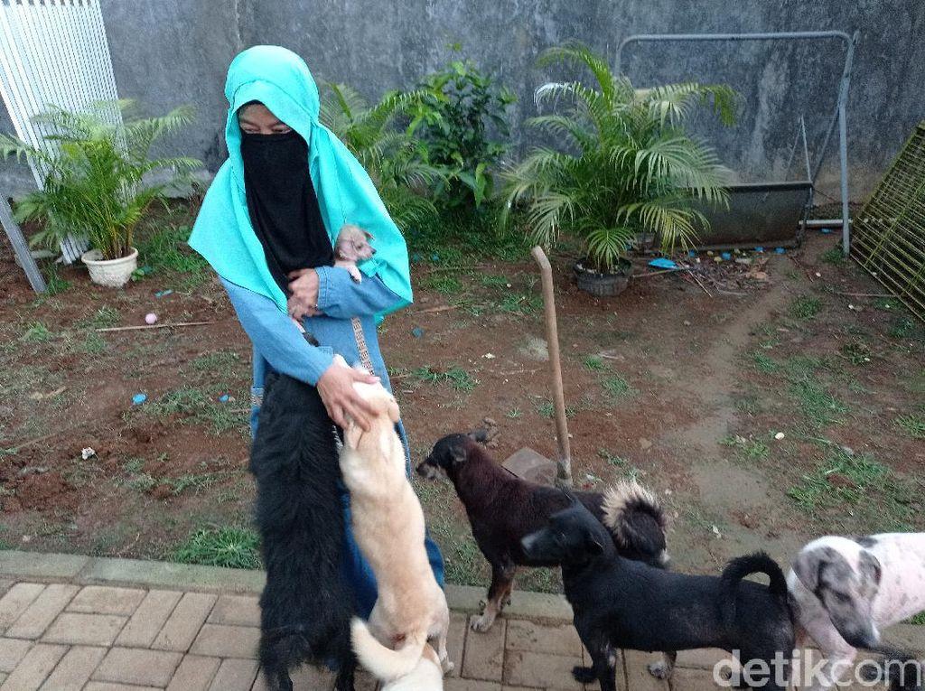 Ikhtiar Wanita Bercadar Ditolak Warga tapi Tetap Rawat Anjing Telantar