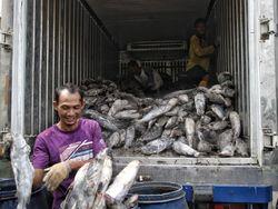 Putaran Transaksi di Sentra Pengasapan Ikan Capai Ratusan Juta/Hari