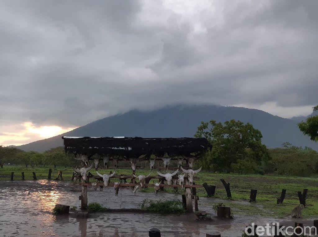 Sudah Tahu? Ini Tempat Terbaik Melihat Taman Nasional Baluran
