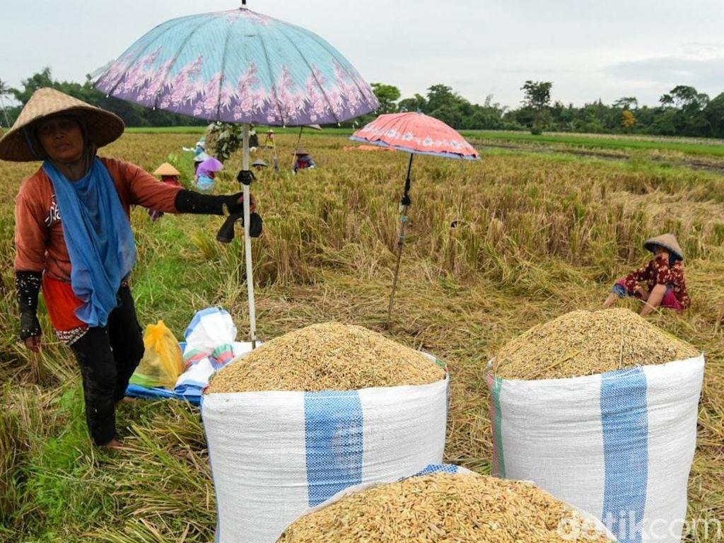 Kementan Bentuk Tim Terpadu untuk Bantu Jaga Harga Jual Gabah Petani