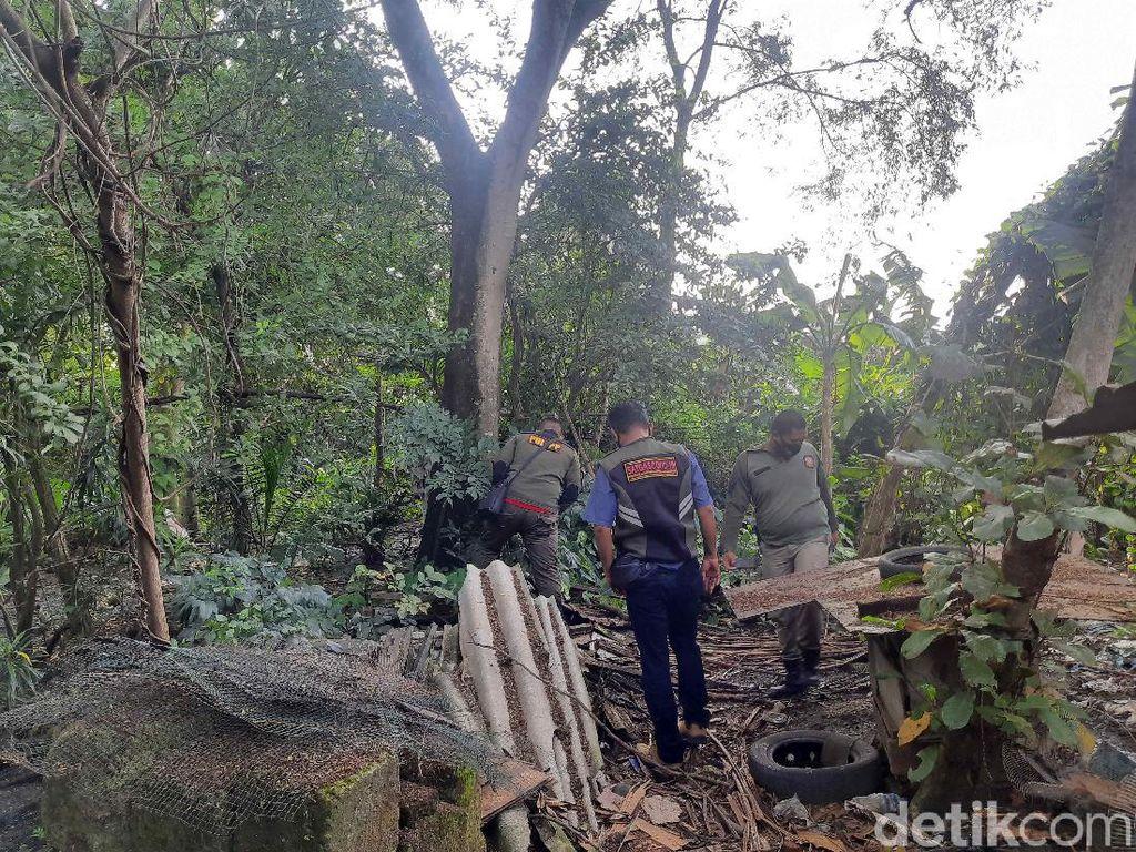 Ulat Bulu Teror Warga Surabaya, Bikin Anak Kecil Gatal-gatal