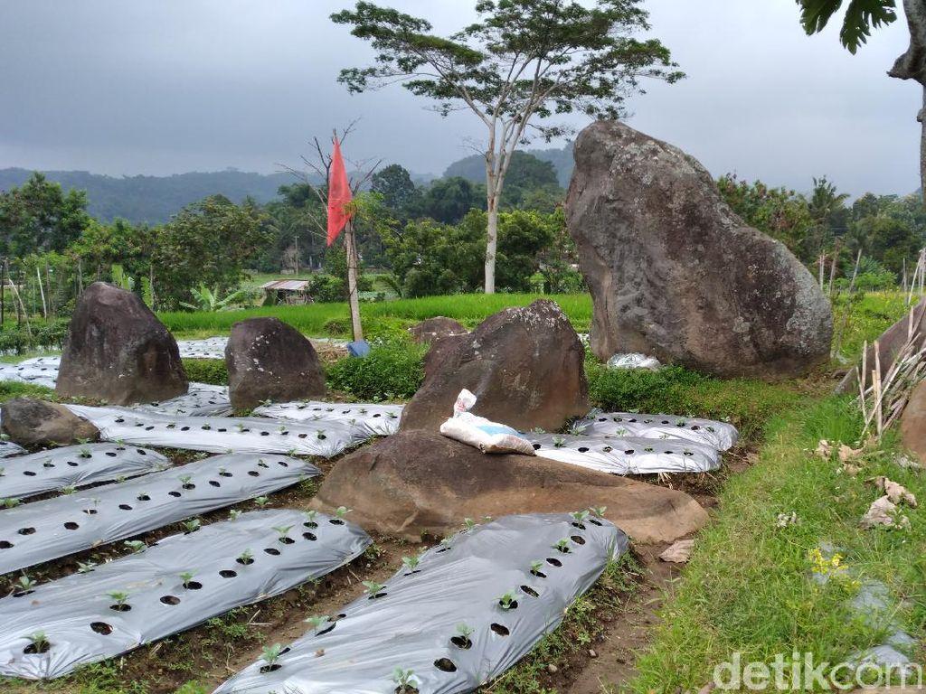 Menilik Ratusan Batu Menhir di Areal Persawahan Karanganyar