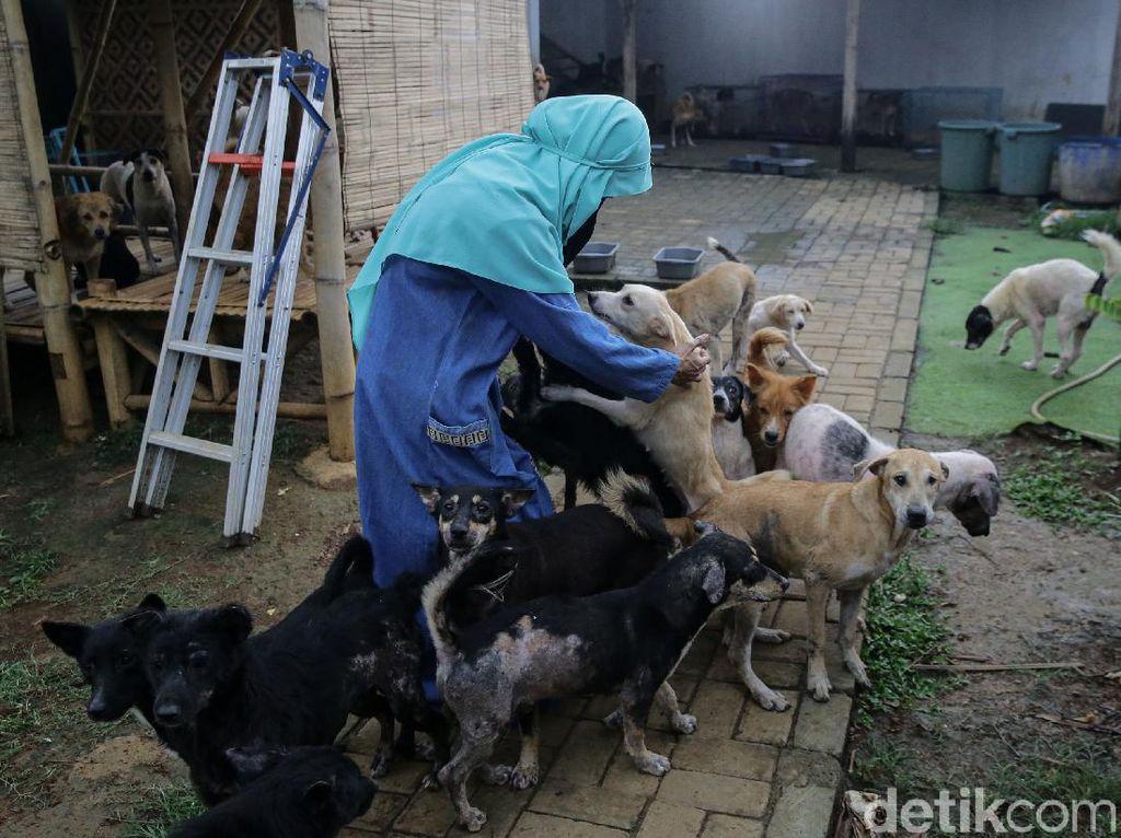 Melihat Lebih dekat Hesti Wanita Bercadar dan Puluhan Anjingnya