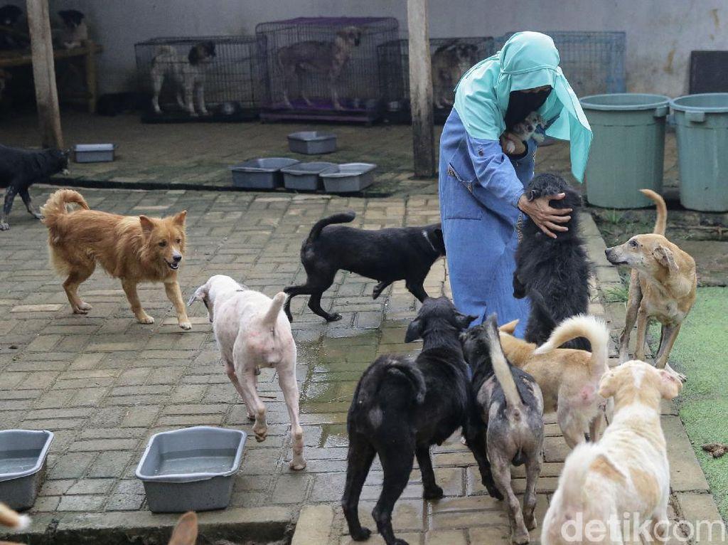 Kisah Wanita Bercadar Tampung Puluhan Anjing Agar Najis Tak Menyebar