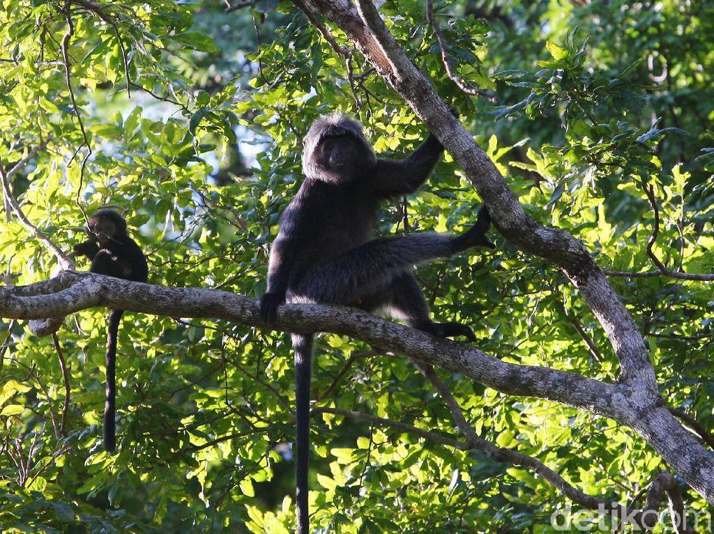 Mengenal Satwa Penghuni Taman Nasional Baluran